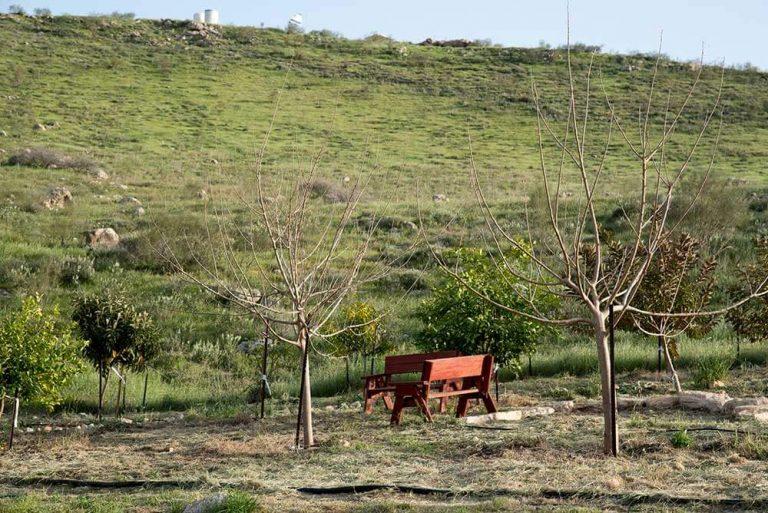 אירוח בחווה טנא ירוק